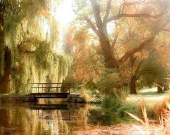 Willow Tree Print, Nature Photography, Rustic Wall Art, Green, Gold, Rustic Decor, Ottawa, Botanic Gardens