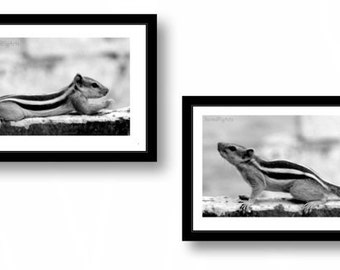 set of two, photography prints, black and white photography, squirrels print, kids room decor, nursery art, animal photography, wall print