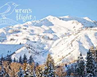 Snowy Mountain and Pines - Digital Download - Cheerful and Bright Fine Art Photography