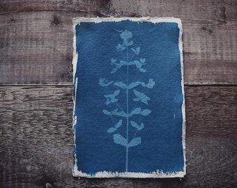 Botanical cyanotype print