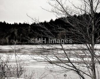 Winter Trees Black and White Digital Download JPG File