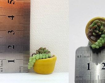 Dollhouse Miniatures Decor 1:12 scale Clutter Pot of Cactus Succulents Plants Artisan Modern