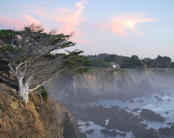 Tree on the Coast Print, Landscape Photography, Wall Art