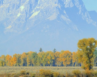 Teton National Park and horses in the shadows