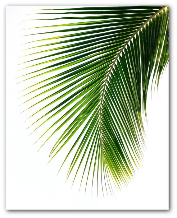 Palm Leaf Print Abstract Tropical Leaf Summer Art Tropical