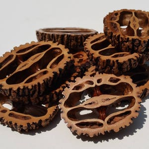 """Black Walnut Slices, 1/4"""" thick  12 Pack FREE SHIPPING"""