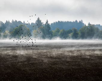 "Fine Art Photography Prints ""Skim"": Framed, Archival, Avian, Birds, Foggy, Autumn, Morning, Poetic, Ethereal, Dreamy, Landscape, Oregon, Art"