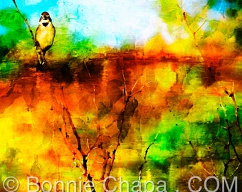 Texas Yellow Bird On A Branch Mesquite Tree Texas Landscape Limited Edition Wall Art Giclee Square Print