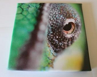 Chameleon eye photo canvas print
