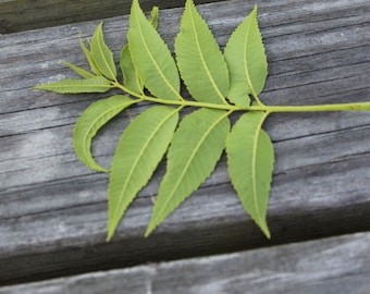 A leaf from a plant on the table