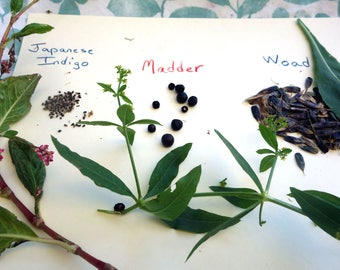 Dye Garden Seed Collection 3 Packets of Dye Plant Seeds  1 Packet Each Japanese Indigo Seeds Madder Seeds and Woad Seeds Natural Dye Seeds