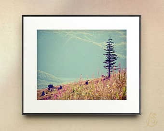 Mount Saint Helens Pine Tree - Mountain, Landscape art, Wild Flowers, Fine Art Photograph - 8x10 8x12 11x14