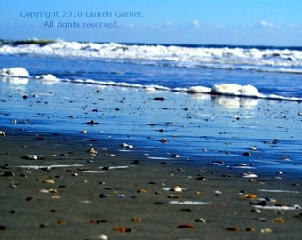 Shellgazing - Shells Beach Photography Nautical Charleston SC South Carolina Blue Brown White Ocean Shore Home Decor Art - 8x10 Photograph