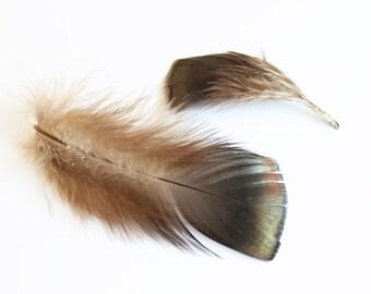"Turkey Plumage Feathers 2-3"" | 25 pcs."