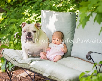 Baby and Babysitter English Bulldog Print, Fine Art Photography Print, Purrfect Pawtrait Pet Photography, Animal Photography