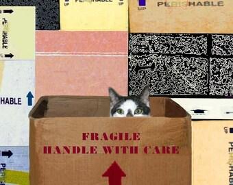 Blank Notecards, Set of 5, Cat Artwork, Gifts for Friends, Best Friend Gift, Blank Greeting Cards, Cat Lovers, Deborah Julian