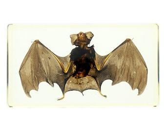 Large Bat Specimen