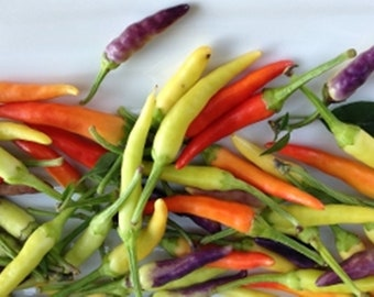 SWEET MICRO PEPPERS Colorful addition to soups and salads tacos 50 beauties
