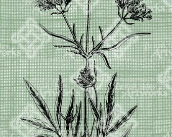 Digital Download Valerian image Antique Illustration digi stamp, digital stamp, Poison Plant Digital Transfer