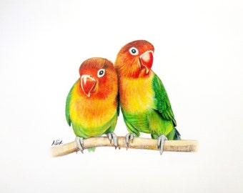 Lovebird colored pencil drawing ORIGINAL