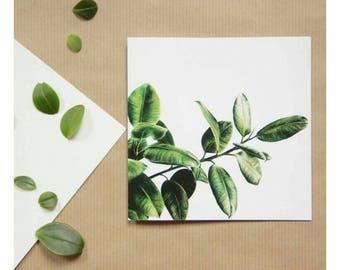 Ficus card