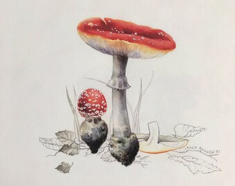 Mushroom PRINT in mount 37x37 By Laura Andrew - Fly Agaric Toadstool ART