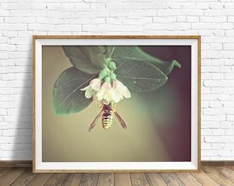 "flower photography, botanical wall art, printable art, downloadable art, large art, large wall art, printable wall art, art - ""Garden Days"""