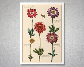 Anemones Vintage Botanical Poster by Daniel Rabel, 1620's - Poster Paper, Sticker or Canvas Print / Gift Idea