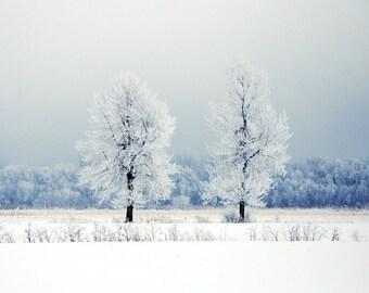 """Winter landscape photography frozen white blue mist landscape snow ice nature  -  """"Icy Blue"""" 8 x 10"""