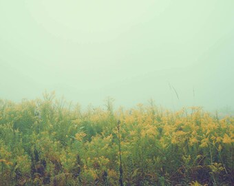 Nature Photograph - Fog Photo - Blur - Nature Art Print - Ohio - Dreamy Photography - Fine Art - Blue Yellow Art Print -Minimalist Decor