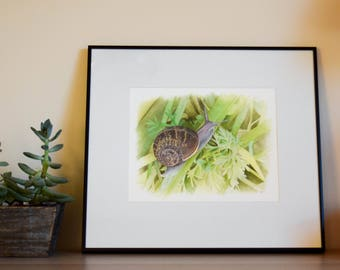 Snailed it! - Garden Snail Gouache Painting - Framed - Original