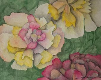 Camelias in Bloom