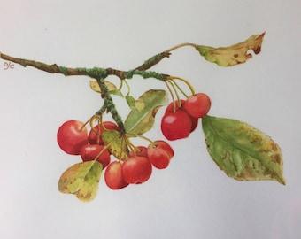 Crab apples, Botanical watercolour, original art