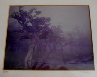 Vintage 1980s Sepia Photograph Signed by Artist Ancient Trees in Fog Framed and Matted Photo
