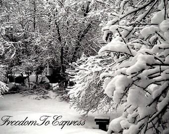 Fallen Snow  Photo Card- by FreedomToExpress