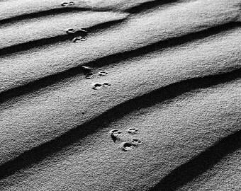 Tracks through the Dunes Photograph