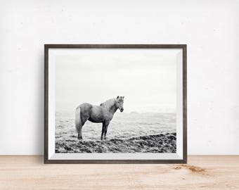 Black and White Icelandic Horse Photograph, Equine Art, Physical Print