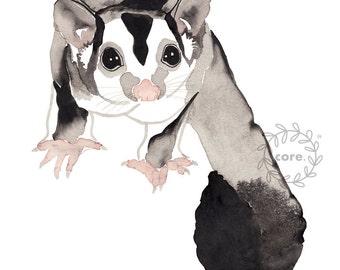 Sugar Glider Australian Fauna watercolour illustration