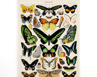 Pull Down Chart - Vintage Butterfly Handmade reproduction print. Vintage Science Plate Print. Educational Diagram - CP209CV