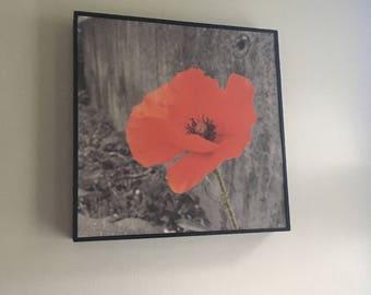 Original Poppy photo Print in deep frame