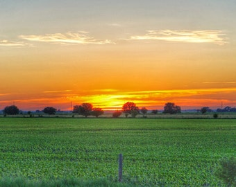 Field Sunset Metal Print