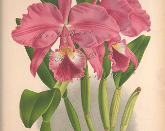 orchid art print, a printable digital download, no. 1305