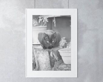Cat Photography, Black Cat Photo, Cat Photo, Cat Pictures, Cat Print, Cat Art, Black Cat Print, Animal Photography Print, Pet Photography