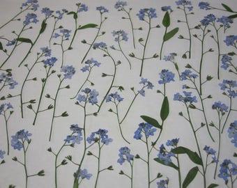 Des fleurs pressées séchées pour l'artisanat - Myosotis bleus naturel avec tige