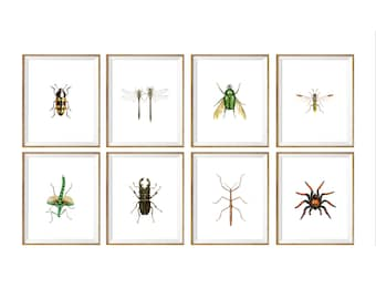Bugs and Insects Art Print SET of 8. bugs chart, bug species,bugs poster, bug illustration, insect wall decor, science class, biology class