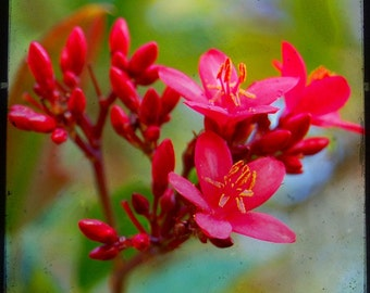 Breathe - Red Flower - Nature - Red Blossom - Fine Art Photograph by Kelly Warren