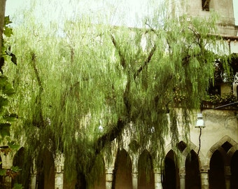 Arched building photography architecture willow tree Italy arches print photo wall art Barcelona Spain