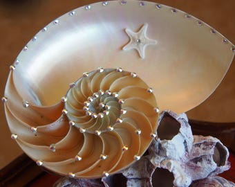 NAUTILUS shell decorated with SWAROVKI CRYSTALS