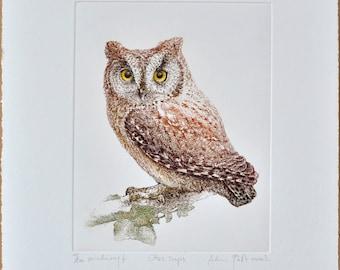 Scops owl (Otus scops) - handmade copper-plate engraving print