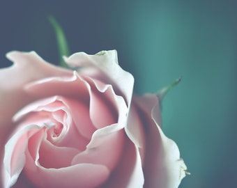 Pink Flower Photography, Pink Rose Floral Photograph, Horizontal Wall Art, Pink and Teal Photo Print, Romantic Feminine Home Wall Decor